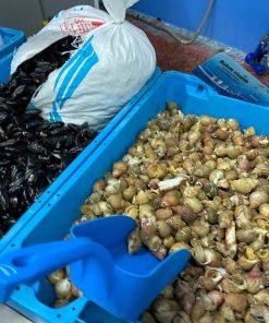 Les Coquillages et Crustacés, retrait en boutique