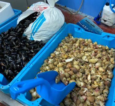 Les Coquillages et Crustacés