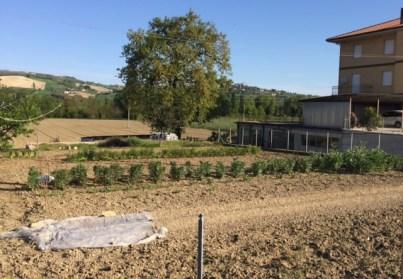 #LeMarcheMagic #LeMarche #Italy #Spring #VeggieGardens #MorningWalks