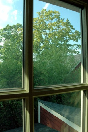 Jedediah Higgins house, Kingston, NJ, Trees, cc-by lemasney