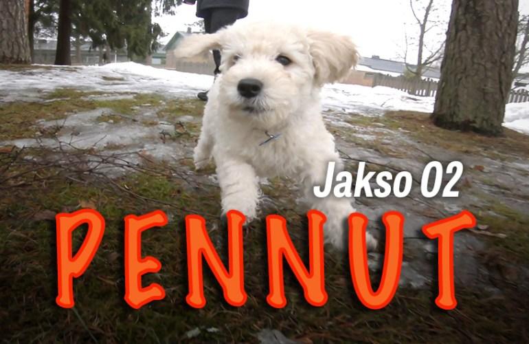 pennut-uuteen-kotiin-jakso-02, pennut, koiranpentu, koiranpennut, pentu, koira, koirat, koiran hoito, lemmikki, lemmikit, lemmikkieläin, lemmikkieläimet