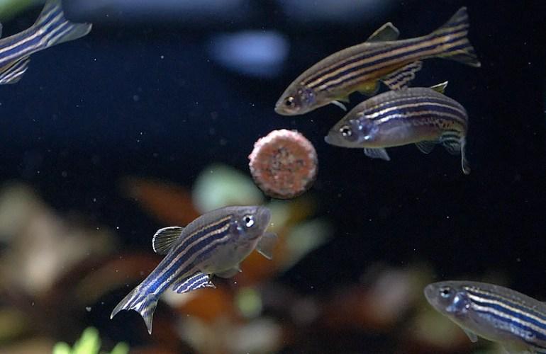 seeprakala, akvaariokala, akvaariokalat, akvaario, akvaarion hoito, lemmikit, lemmikkieläimet