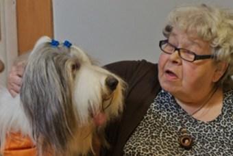 Koirat - Kaverikoirat ilahduttaa ja piristää ihmisiä