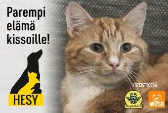 Kissat: HESY tarjoaa kodittomille kissoille paremman elämän