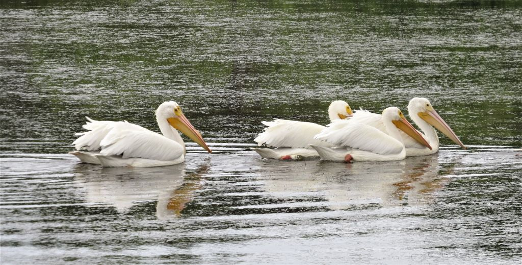 Brown Lemon County Lake