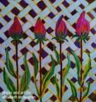 """""""Tulip Line-up"""""""