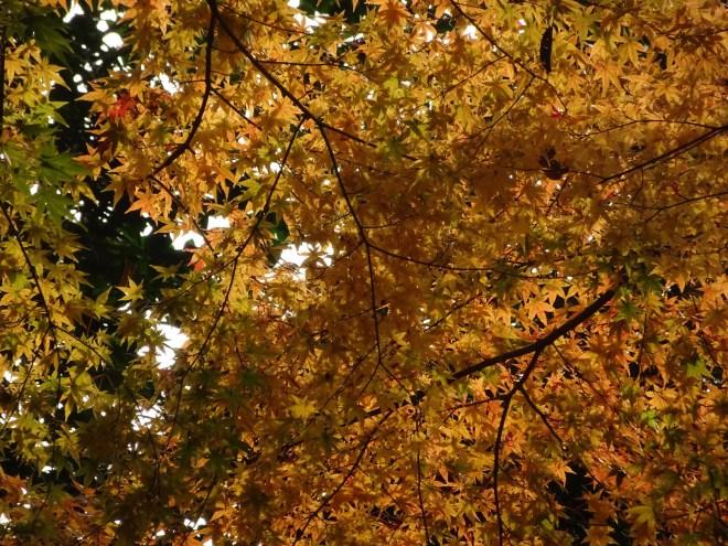 couleur de l'automne à Matsue
