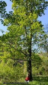 énergies des arbres, formation en développement personnel Ecoute Holistique Sensitive