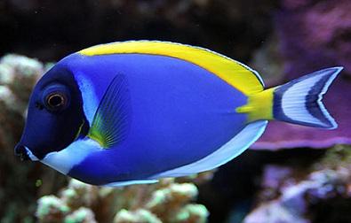 Introduction | Le Monde des Aquariums