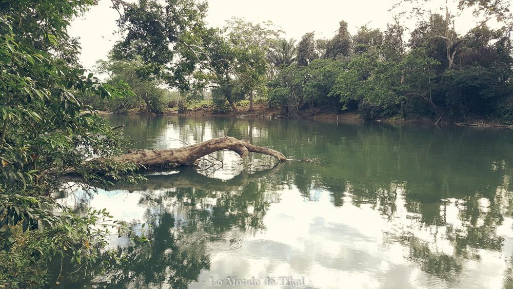 belize clarissa falls resort rivière