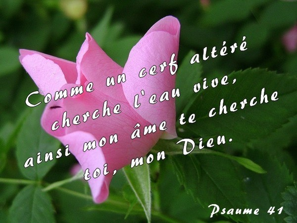 Psaume 41