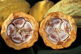 Graines_Cacao