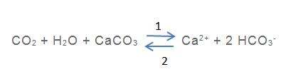 calco_carbonique