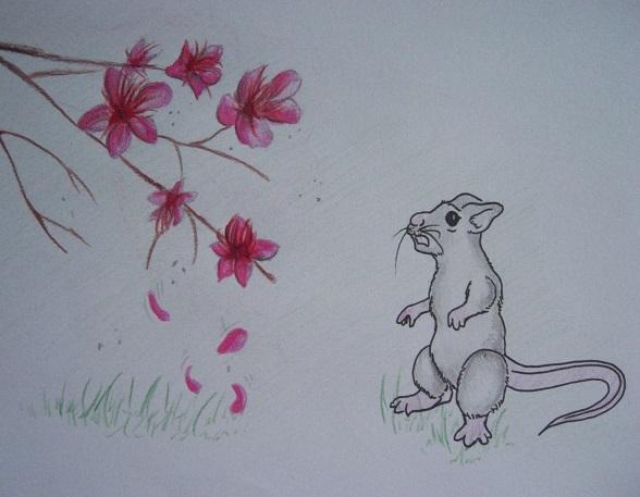 cerisier2