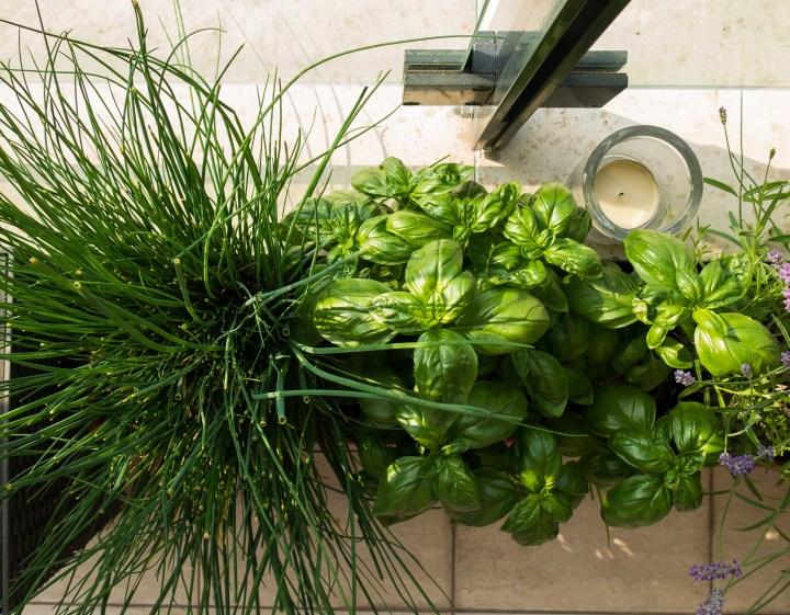 9 bylinek, které na žádném balkoně nebo parapetu nesmí chybět