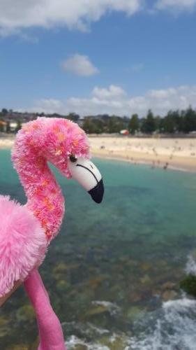 Pinko à Cogee Beach