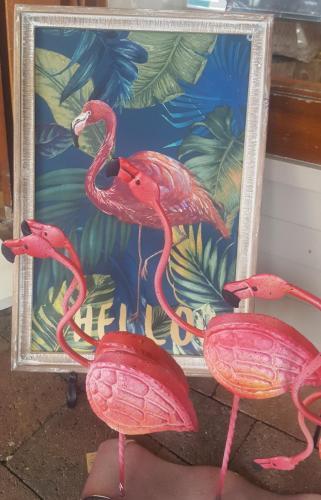 Pinko voit des copains à Byron Bay