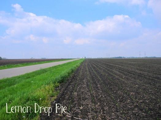 Field Mom Corn Acre