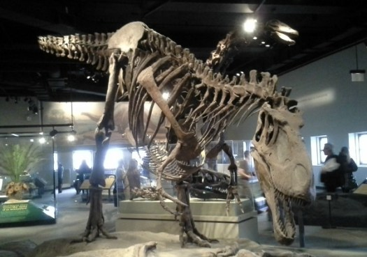 We saw dinosaur bones, too!