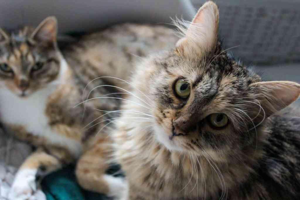 Aus dem Artikel: 1 Jahr mit Katzen – ein Erfahrungsbericht.