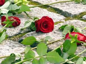auschwitz birkenau rose