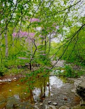 Waterfall Glen spring 2015