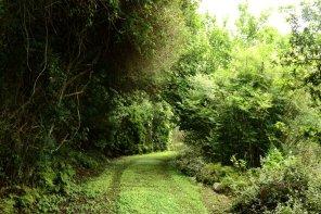 Lemonwood Forest