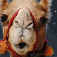 Stellata beduina (parte 2 di 2)