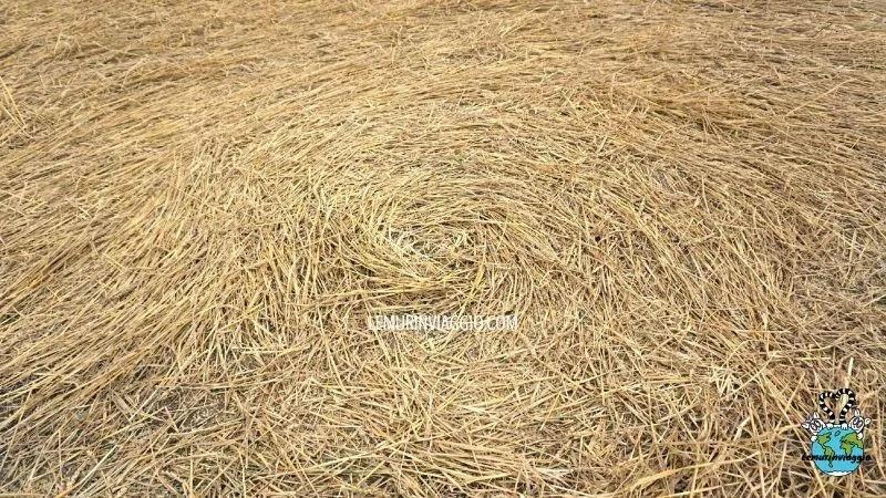 Il centro del crop circle di Etchilampton