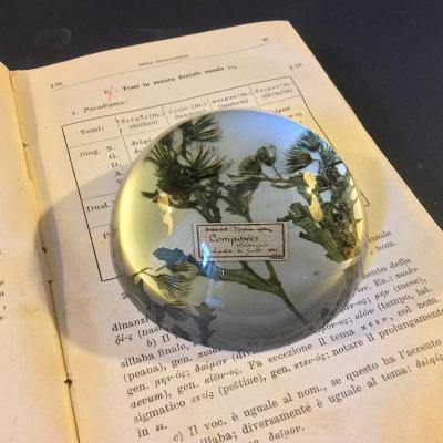 fermacarte vetro erbe