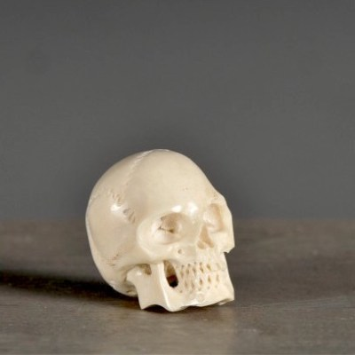 teschio osso bianco
