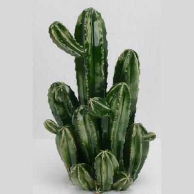 cespuglio cactus