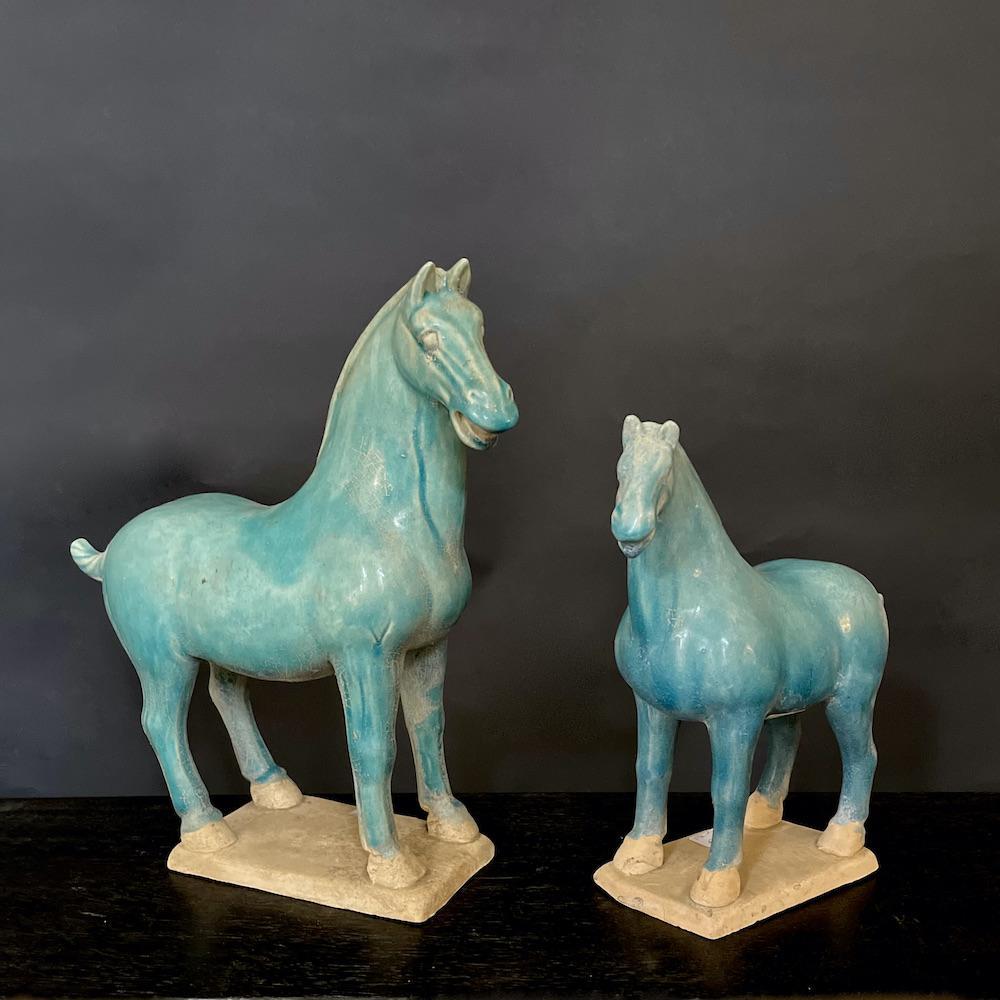 cavalli turchesi