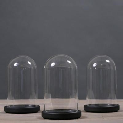 campana di vetro base legno nero