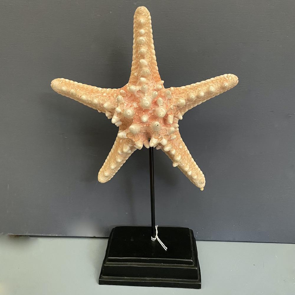 stella marina rosa su piedistallo