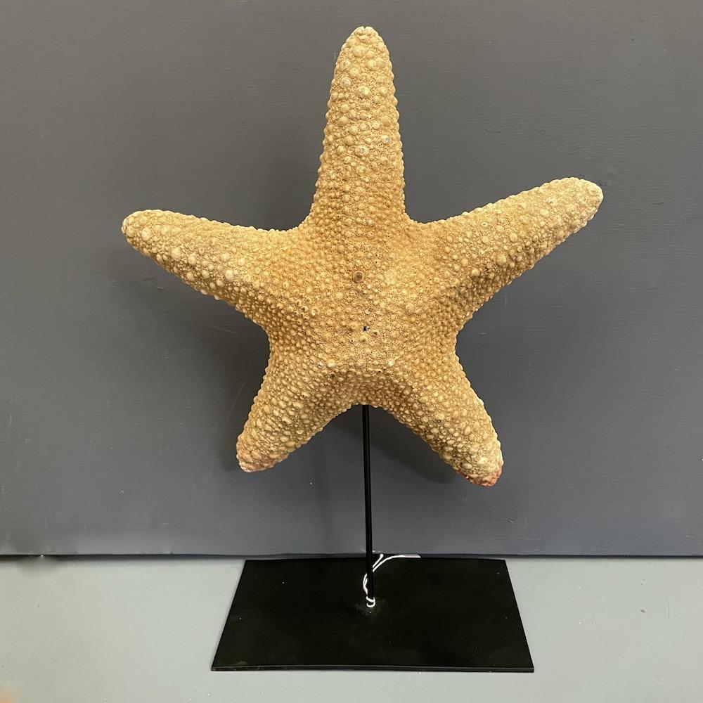 stella marina su piedistallo