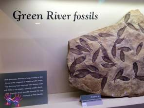Orkney Fossil & Heritage Centre, Burray