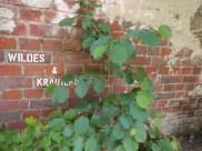 6-klause-wildesundkraeauter-graffiti-gruenerbeton