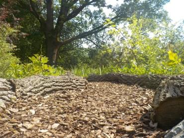 11-botanischergarten-rindenmulch-froschperspektive-gruenerbeton