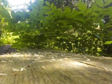 12-botanischergarten-bank-blueten-gruenerbeton