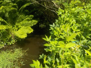 15-botanischergarten-wasser-libellen-gruenerbeton