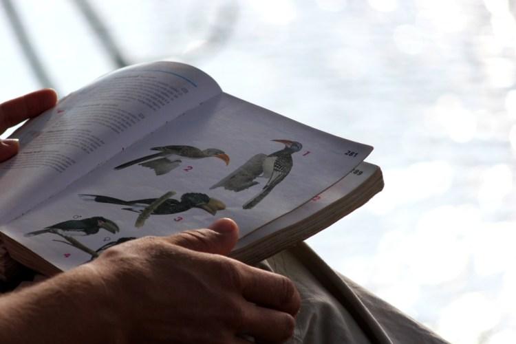 Bird Census