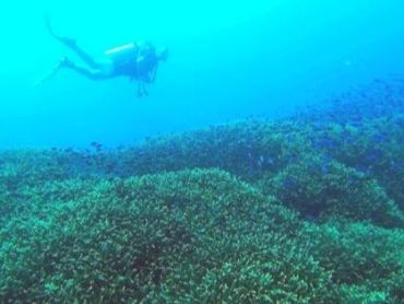Becoming a Divemaster: 4 Truths You Should Know Before You Start