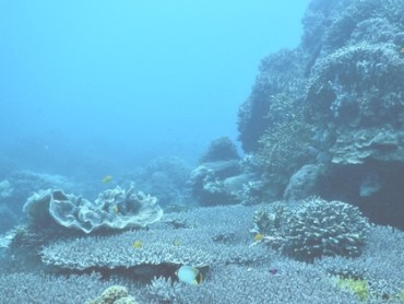 Dive Guide: 3 Magical Dive Sites In Siquijor