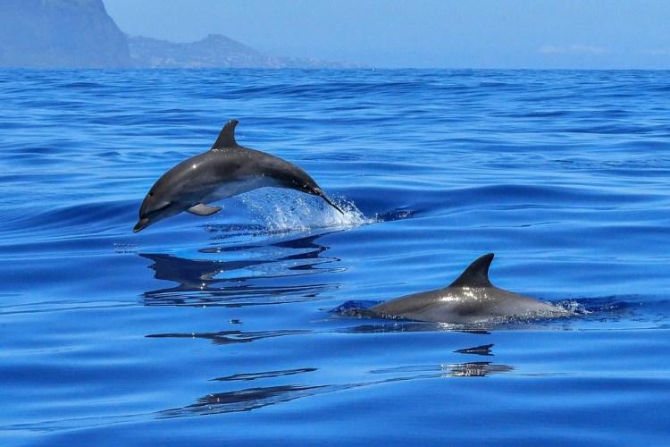 Delfine in Takalana Bay