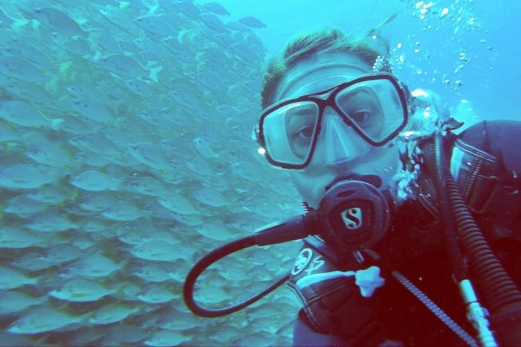 School Of Fish Gran Canaria