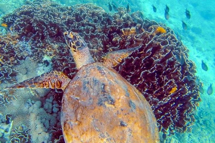 Diving in Pulau Weh, Indonesia