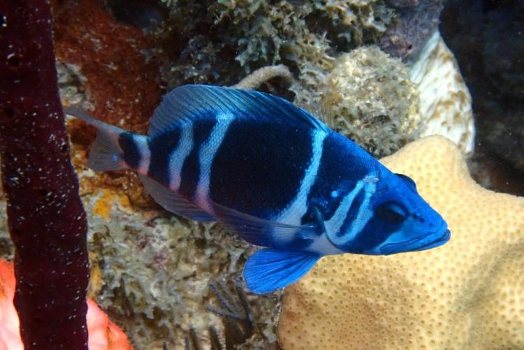 Utila_Moon Hole Fish