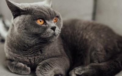 ¿Están más tristes los gatos en otoño?