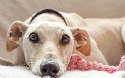 6 cosas que debes saber antes de adoptar a una mascota